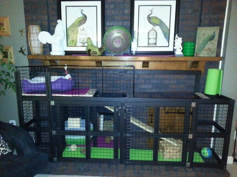 Custom rabbit cage for my English lop! | Bunny Hutch | Pinterest