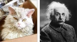 Image result for Show the picture of Albert Einstein with the cat.