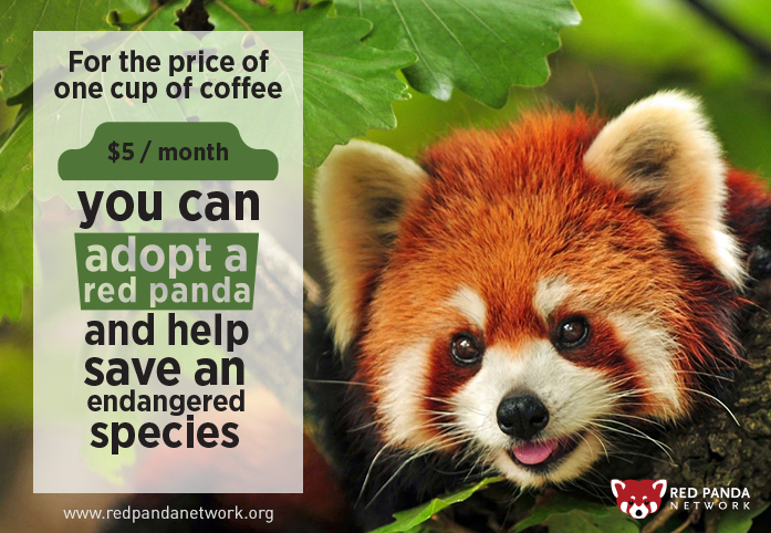 Favori For $5 per month, you can be a Red Panda hero! Help save this  OH52