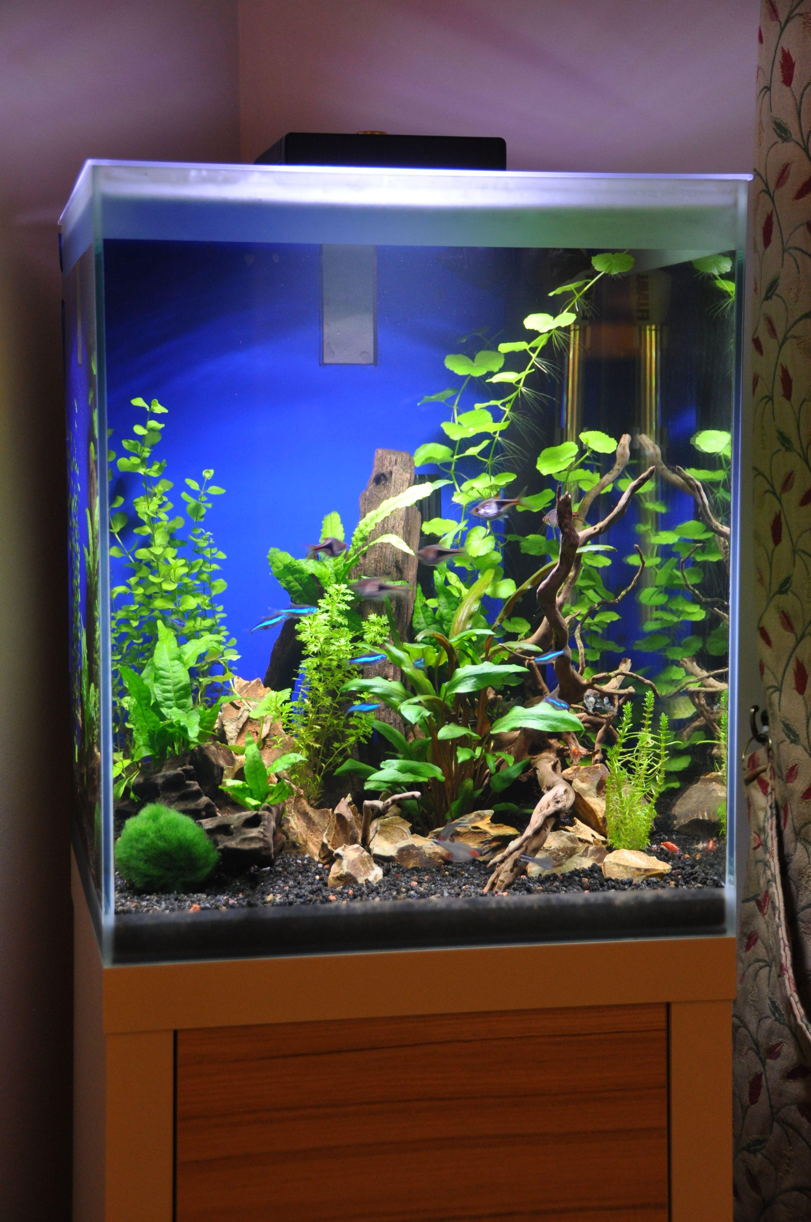 Fluval Fresh F35 planted aquarium | Fishies and tanks ...