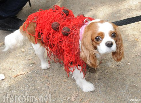 Photos Top 10 Dog Costumes At 2011 Tompkins Square Park Halloween