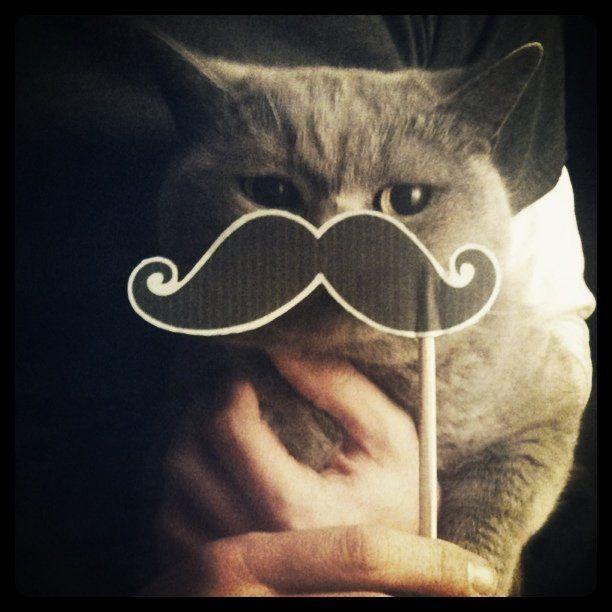 Mustachekitty <3