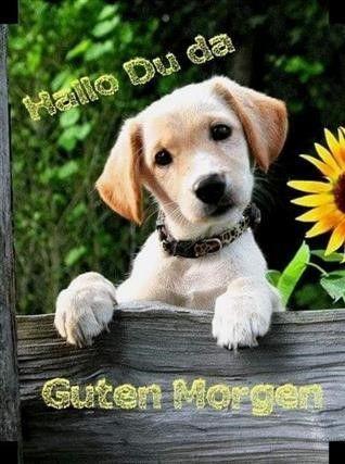 guten morgen bilder hunde lustig – Gb Bilder • GB Pics – Gästebuchbilder