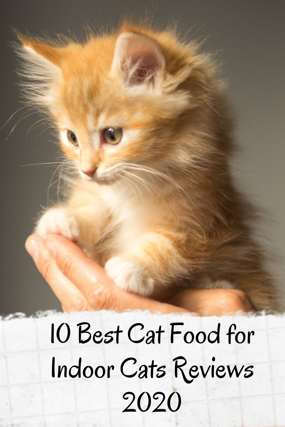 Pin On Best Cat Food Toys And Supplies