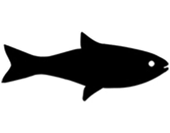 Fish Logo 7 Fish On Svg Fish Hunting Fishing Svg Files Fish Svg
