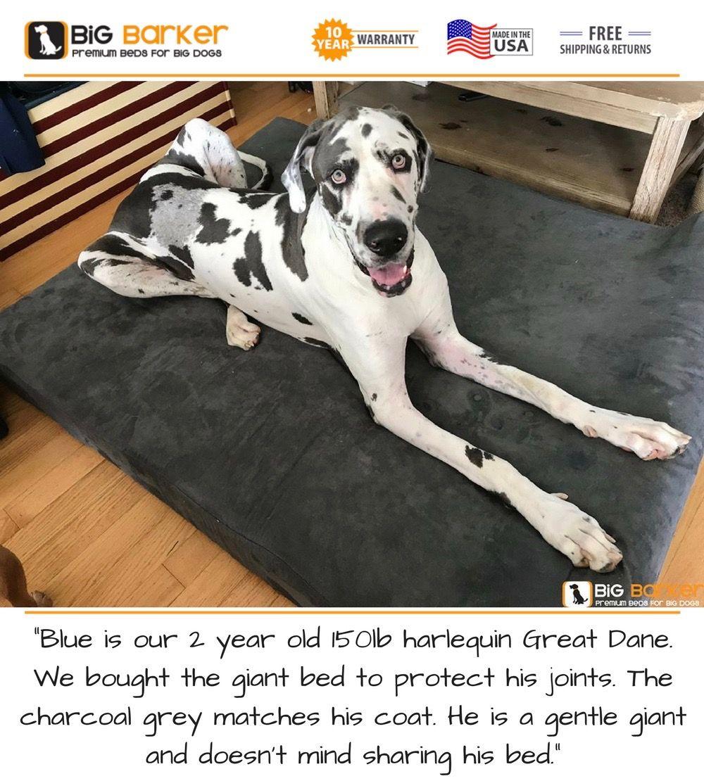 Orthopedic Dog Beds For Large Extra Large Dogs Large Breed Dog