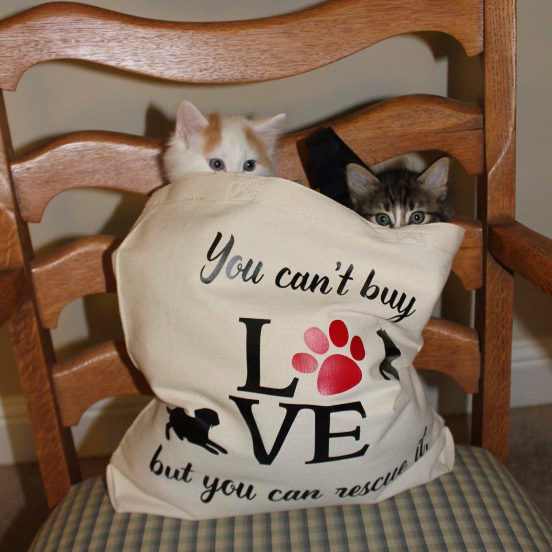 Cat lover gift cat mom gift cat rescue kitten