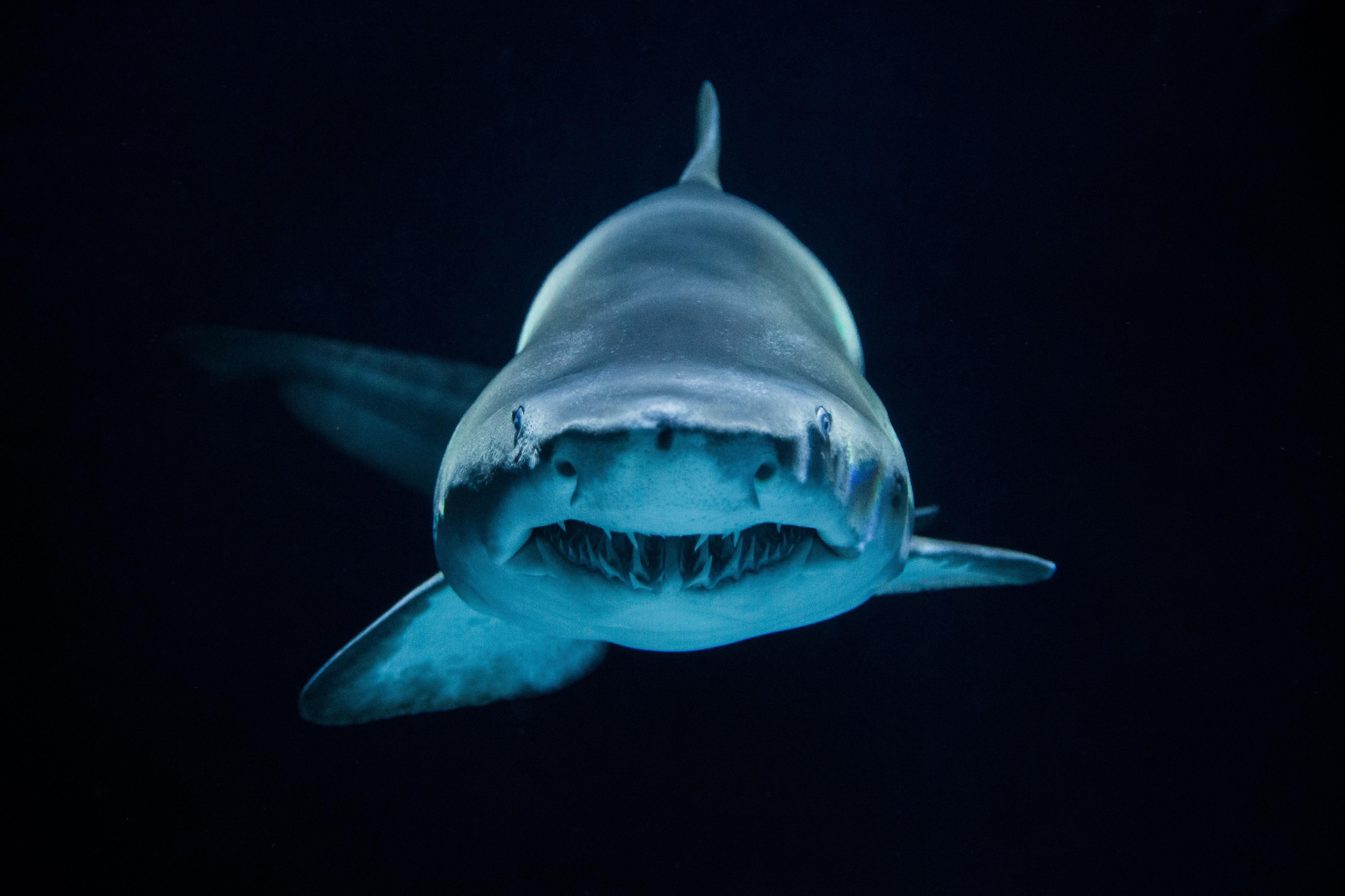 7ae156f3a0c3044c57b5763af826c41d Frais De Aquarium Osaka Concept