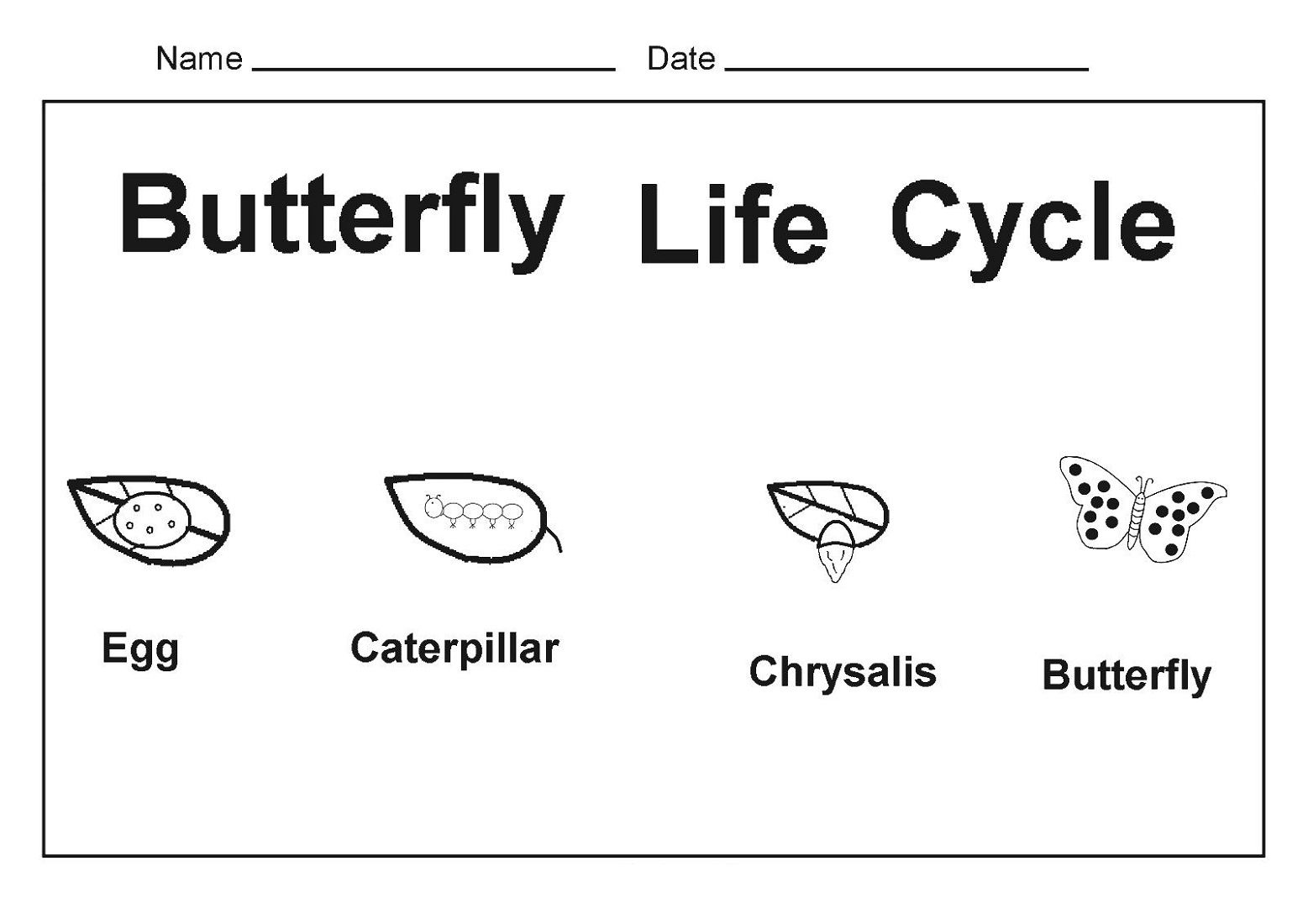 Online Worksheets For Kindergarten Butterfly Life Cycle