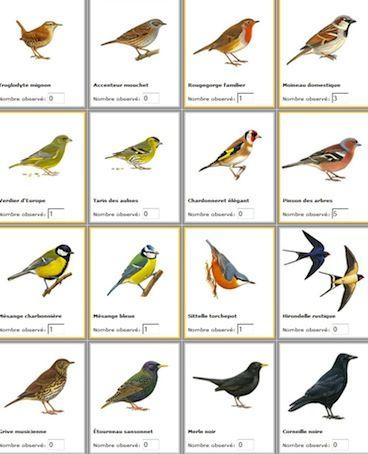 Oiseaux ordinaires d 39 ile de france nature paris for Oiseaux de france