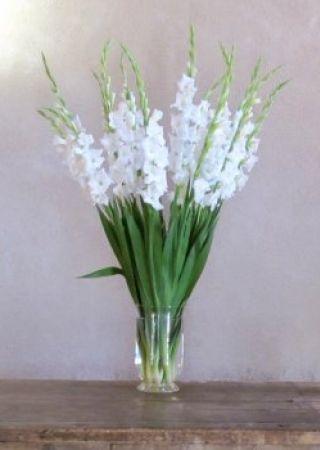 glaieul blanc les fleurs pour la table pinterest glaieul fleur et fleurs annuelles. Black Bedroom Furniture Sets. Home Design Ideas