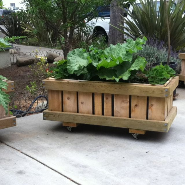 Rhubarb And Strawberries Rolling Planter Sanctuspheres Rolling