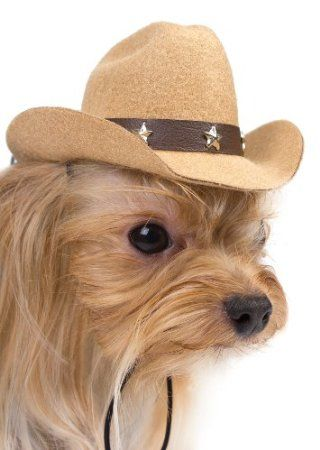 Cowboy Hats For Small Dogs Tan Color Amazon Com Pet Supplies Yorkie Yorkie Moms Small Dogs