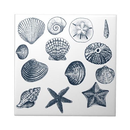 Nautical shells tile pinterest tatouages coquillages for Koi larousse