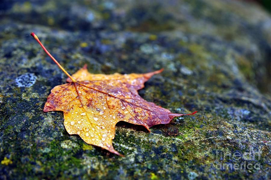 Autumn Leaf On Rocky Ledge Photograph by Terri Gostola in FineArt America-