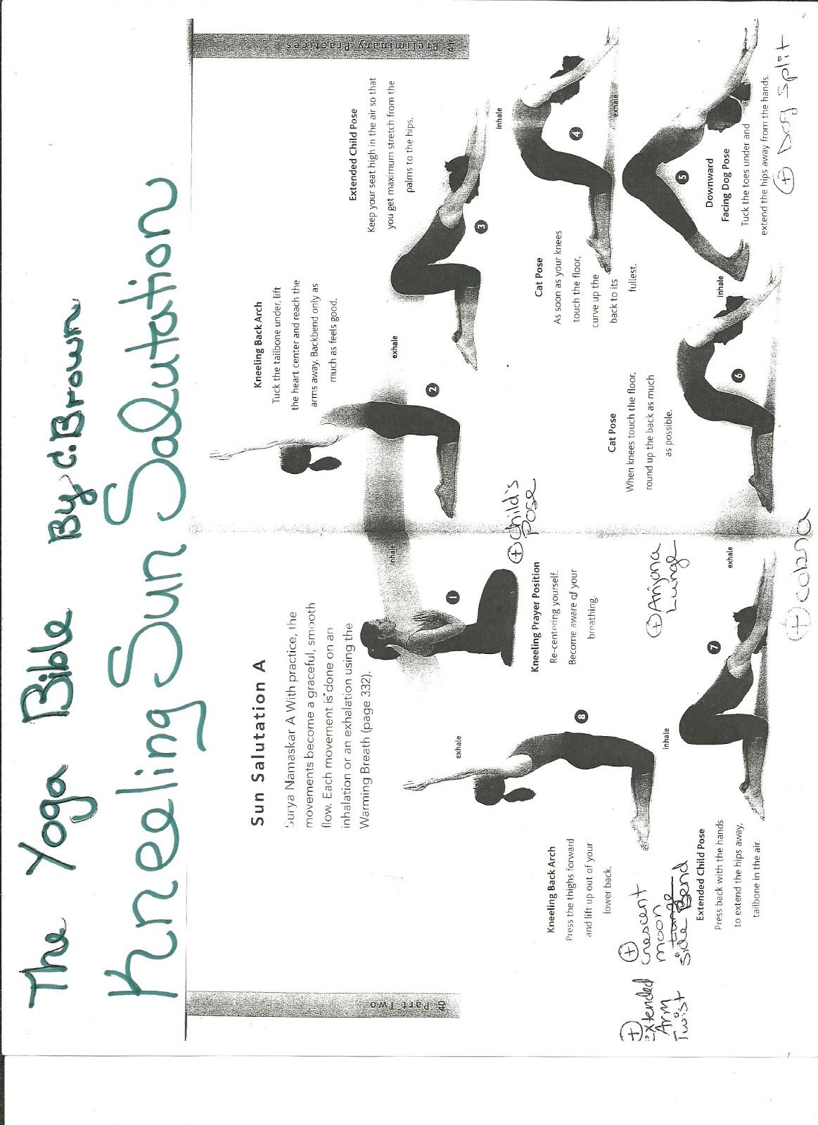 The Complete Yoga Plus Blog Sequences Kneeling Sun Salutations