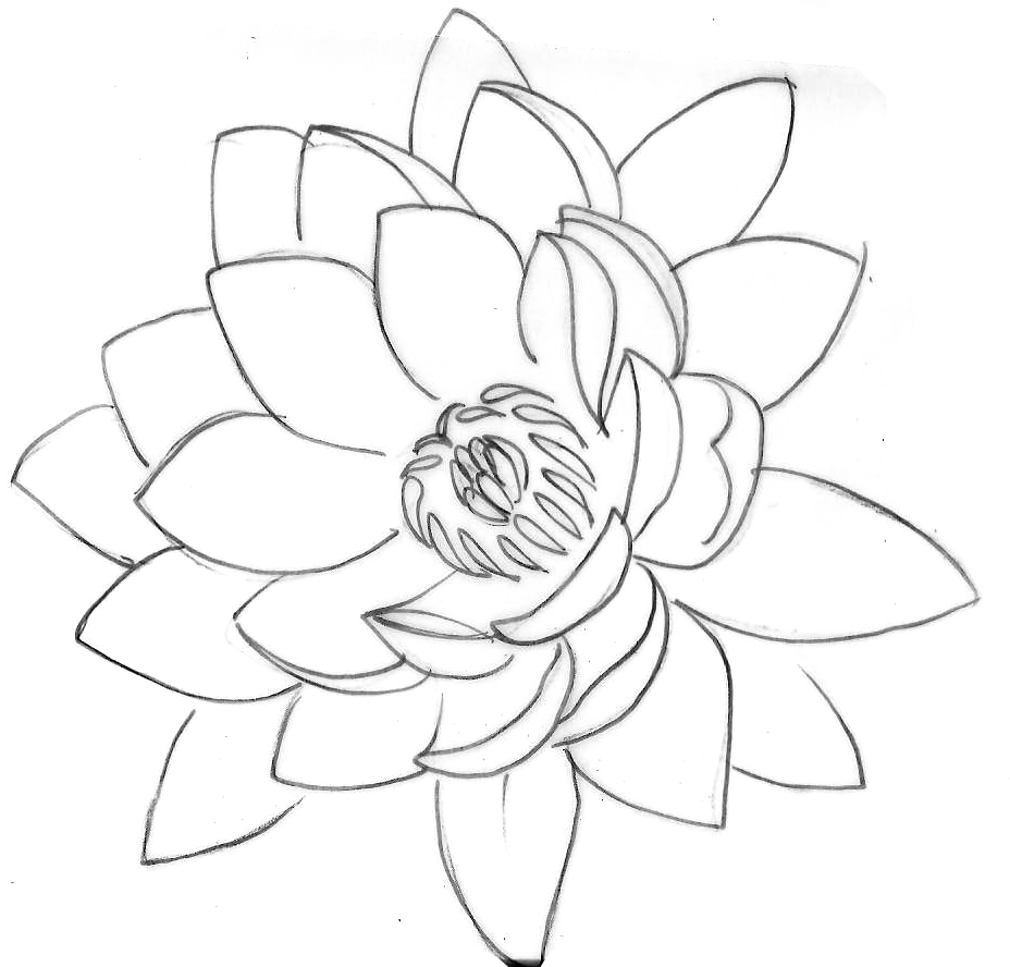 Lotus flower photo this photo was uploaded by gumbeat find other lotus flower photo this photo was uploaded by gumbeat find other lotus flower pictures and photos or upload your own with photobucket free image and v izmirmasajfo