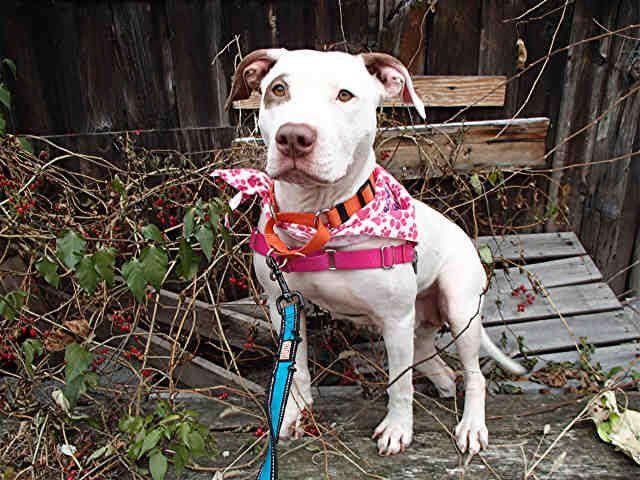 Tasha Found In Pittsburgh Pa Now Adoptable Petharbor Com