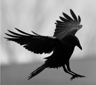 """Quoth the Raven """"Nevermore""""."""