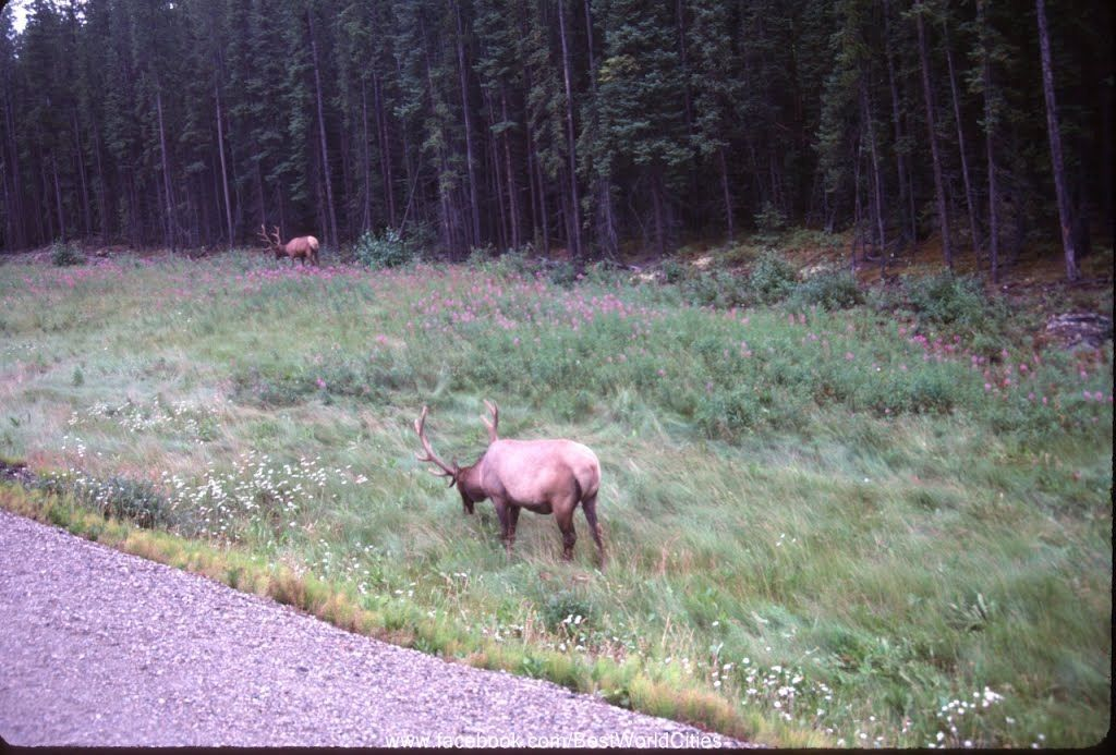 Lots Of Local Wildlife In Prince George Canada Wildlife American Cities Prince George
