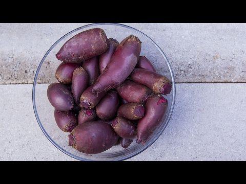 Cómo fermentar betabeles
