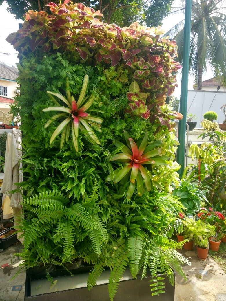 Bromeliad Vertical Garden Wall