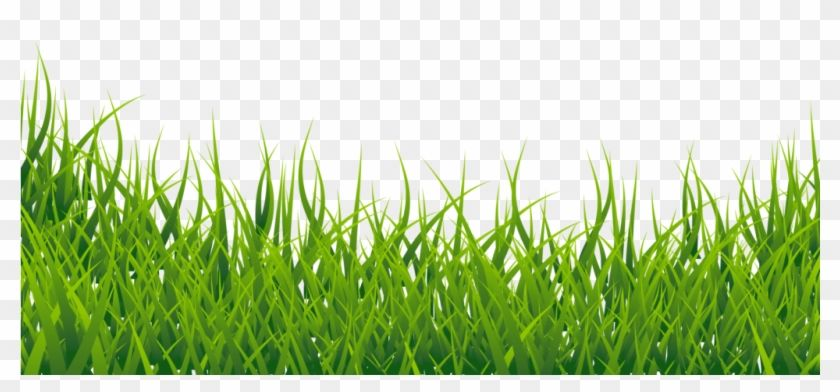 Free Png Grass Vector Png Images Transparent Grass Png Images Hd Clipart Grass Vector Grass Silhouette Grass Clipart