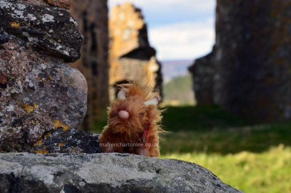 Highland Coo (cow) at Auchidoun Castle, Scotland, 11.7x16.5in Print