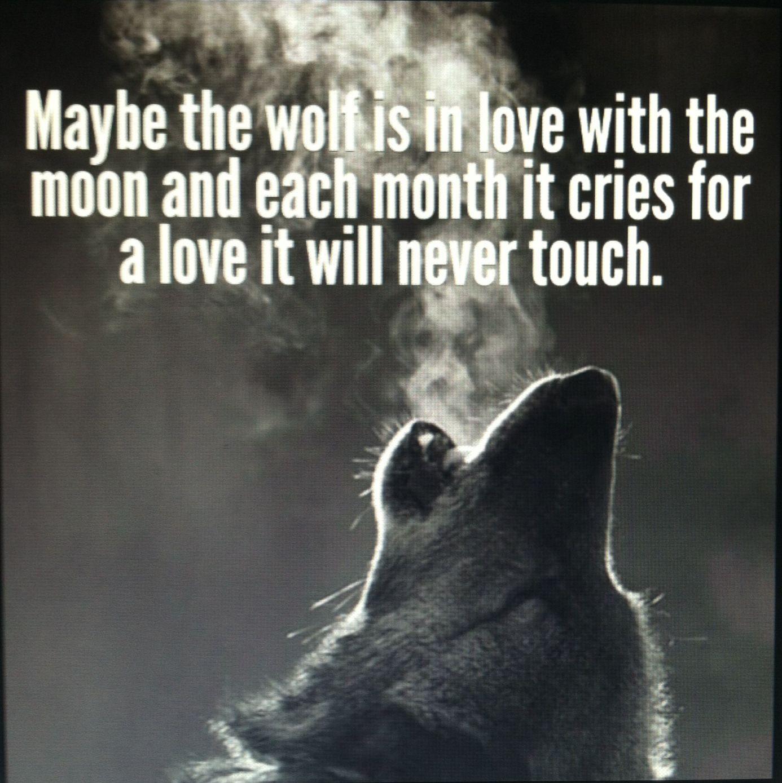 Wolf quote  Lone wolf quotes, Wolf quotes, Wolf love