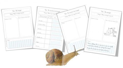 sciences les escargots observations elevage escargoy escargot escargot maternelle et. Black Bedroom Furniture Sets. Home Design Ideas