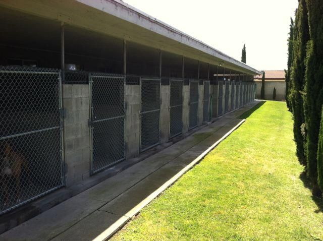 Our large property is equipped for boarding large dogs and even extra large dogs in their indoor/outdoor kennels. The suites are as large as 5x5 inside/ 5x20 outside are available. $21 per night large Run $23 per night x-large run.