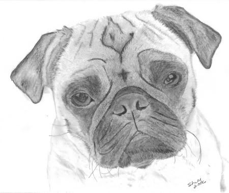 Cartoon Pug Drawing Pug Face Drawing Dog Art Puppy Drawing