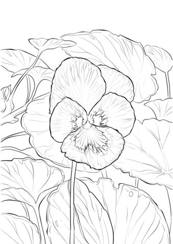 Jardín de Pensamientos Dibujo para colorear   Flores   Pinterest ...