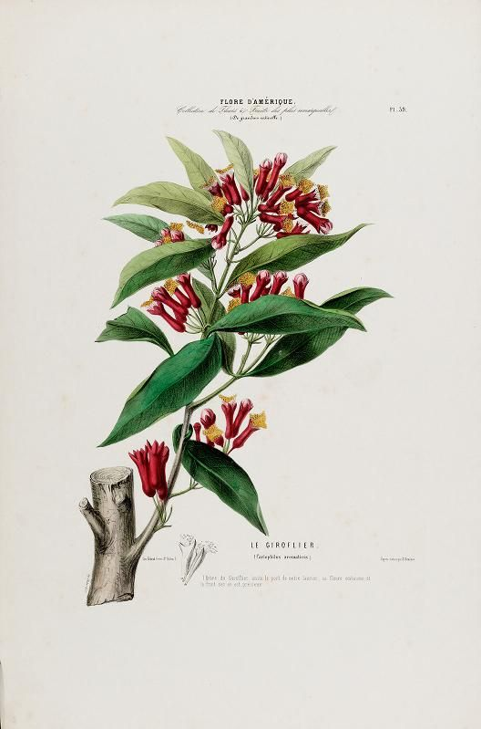 Flora of America, drawn from nature su ...