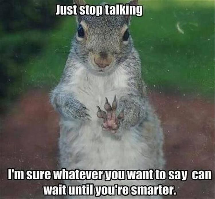 Funny Squirrels Funny Squirrel Photos Squirrel Memes Oh So - Cat squirrel playing cutest thing youll see day