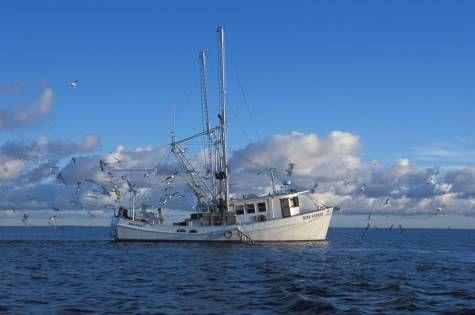 Commercial Shrimp Boats In Grand Isle La Shrimp Boat