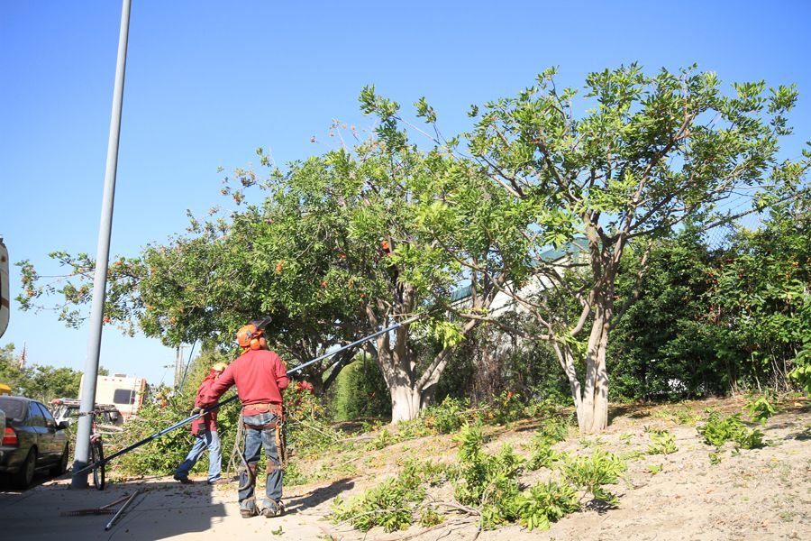 Tree Removal in Los Angeles  http://www.yourwaytreeserviceinc.com/5-star-rated-tree-service-los-angeles/