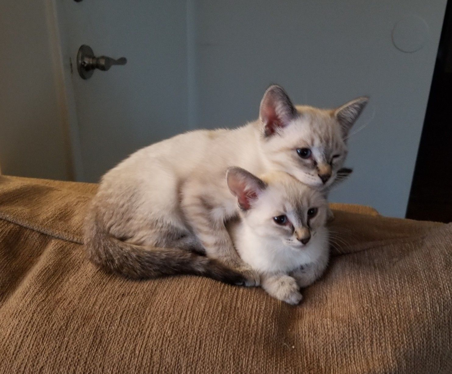 Available Kittens for sale in Jacksonville Florida Cat