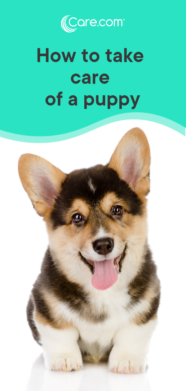 How to to take care of a puppy A new owner's guide