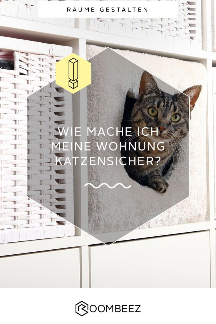 #katzen #Wohnung #Ideen Auf ROOMBEEZ Erfährst Du, Wie Du Deine Wohnung 🐈