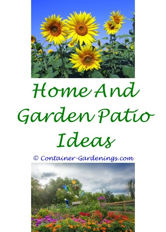 New Ideas For Container Gardening   Garden ideas, Mosquito plants ...