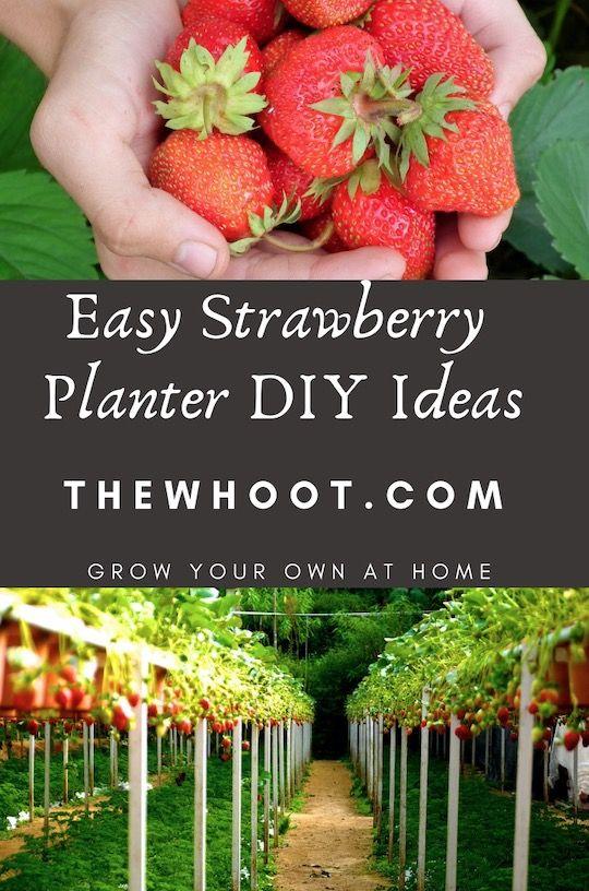 Strawberry Planter Ideas Pinterest Best Projects Video