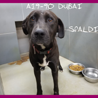 Spalding County Animal Shelter Last Chance Pets Animal Shelter Animals Dogs