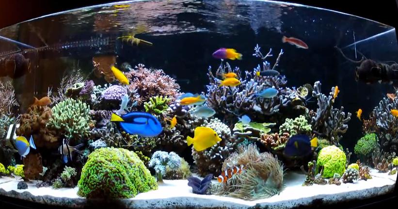 Starting A Saltwater Aquarium 101 Saltwater Aquarium Saltwater Aquarium Fish Aquarium Fish
