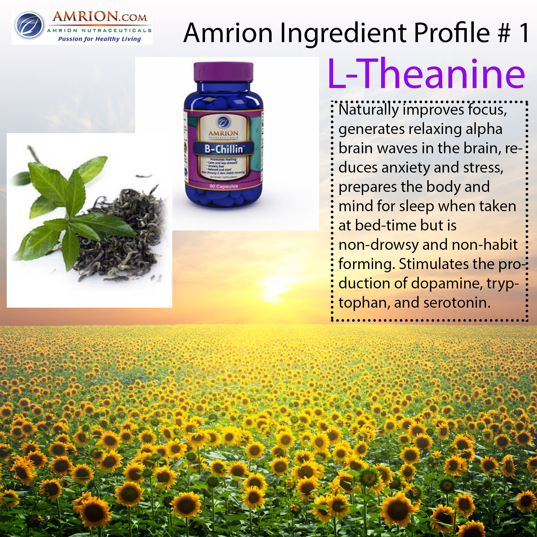 L Theanine Amrion Ingre Nt Profile 1 Vitamins