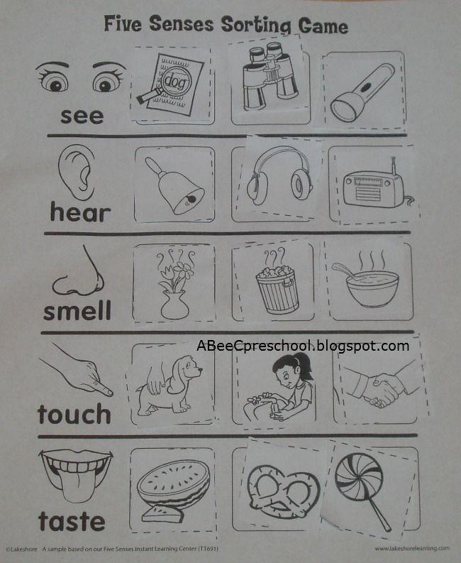 A Bee C Preschool Cinco De Mayo And Five Senses Unit Use