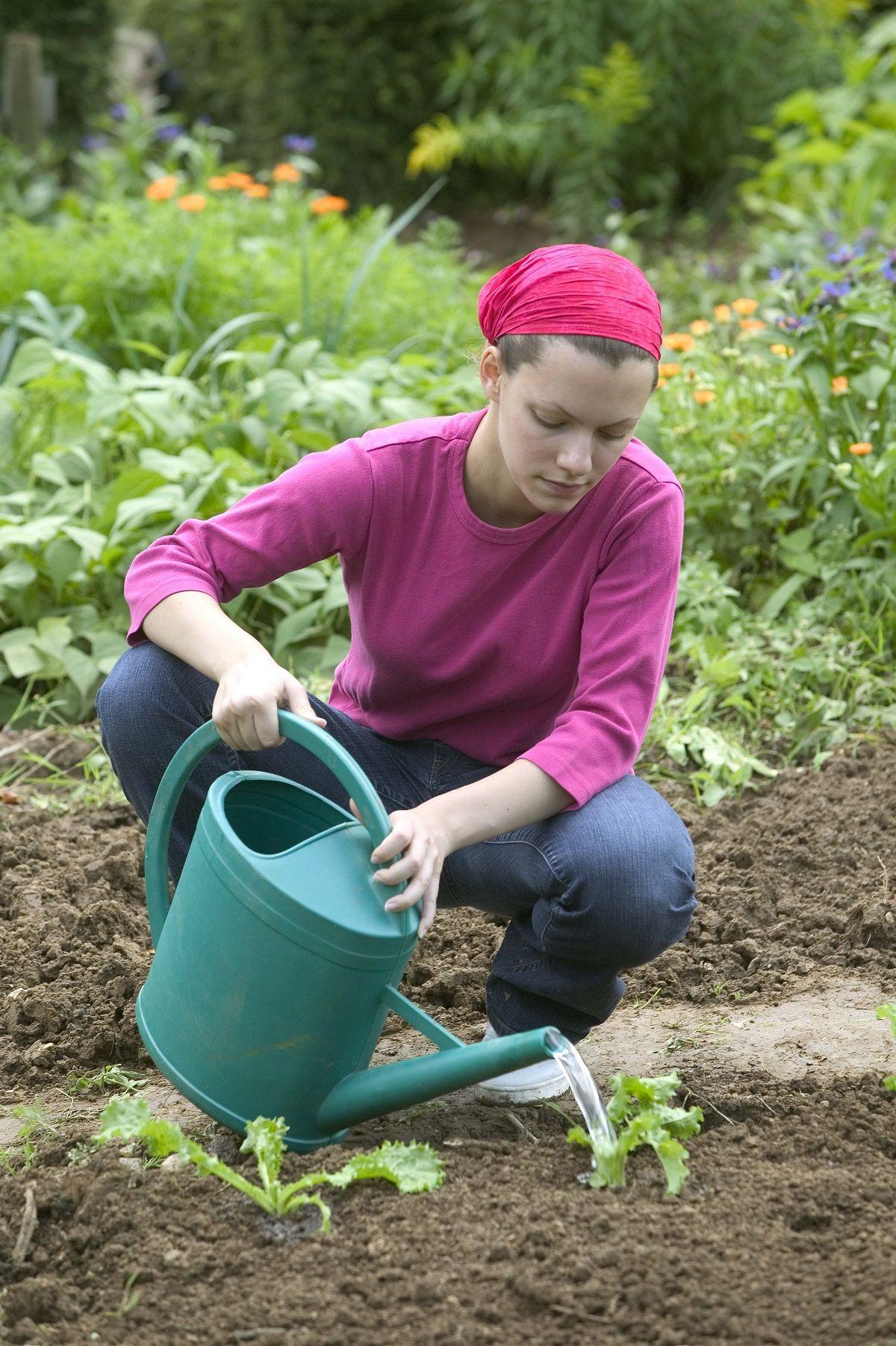 Calendrier du potager quand planter, récolter et