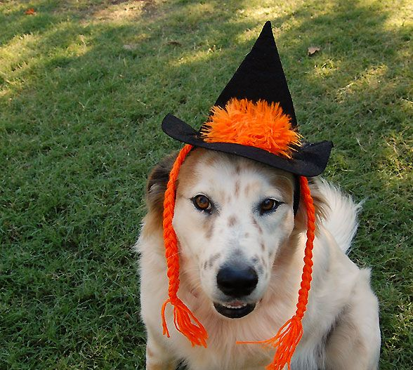 Fido's Freebie Friday Counts Down to Halloween