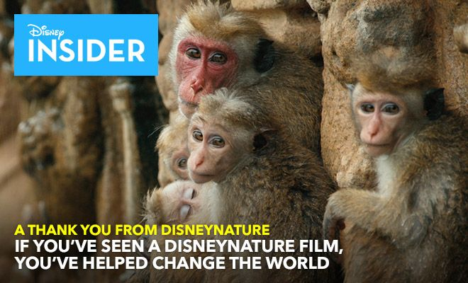If You've Seen a Disneynature Film, You've Helped Change the World http://blogs.disney.com/insider/2015/03/19/if-youve-seen-a-disneynature-film-youve-helped-change-the-world/?cmp=emc|insider|natural|disney-insider|2015-03-23|insider|hero