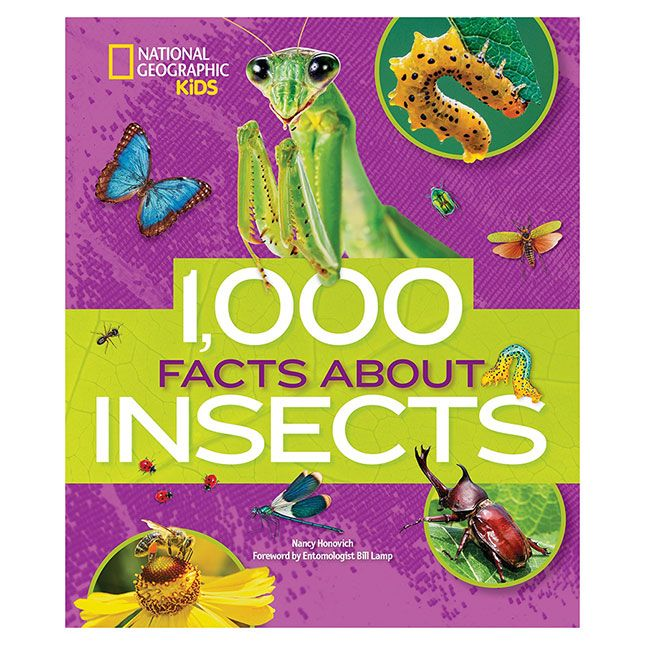 1000 Facts About Insects - Books for Ages 8 to 12 - Fat Brain Toys